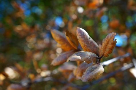 fall autumn colors